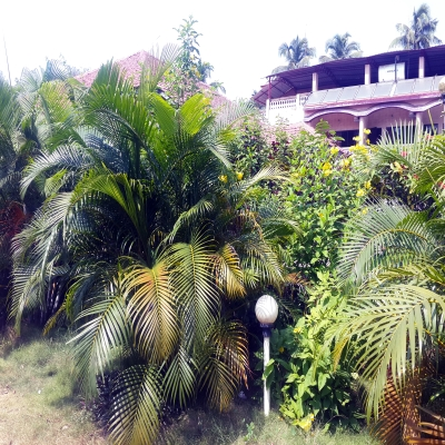 Plants,Greenery around the cottages